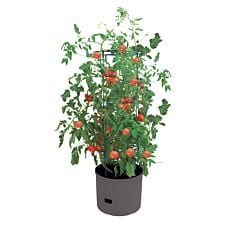 Tomatenturm Jumbo