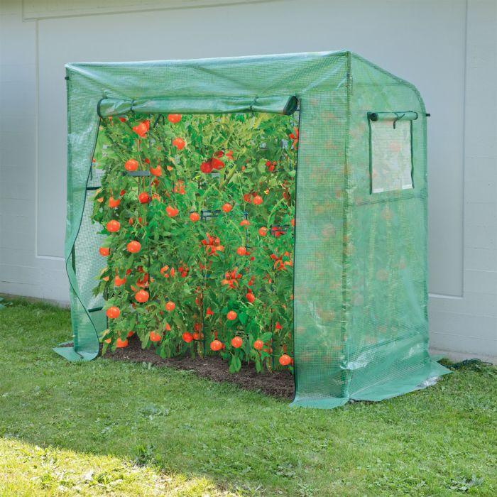 Tomaten Gewächshaus