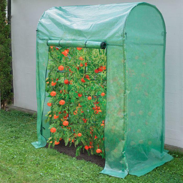 Serre à tomates, 180x150 cm.